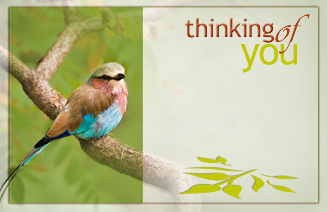 Thinking of You - Birds